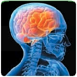 neuroestetica64
