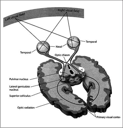 neuroestetica20